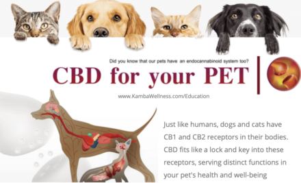 The Endocannabinoid System and Your Pets