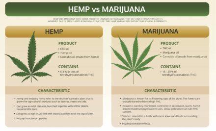 Differences Between Hemp & Marijuana